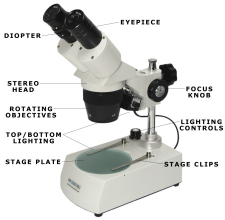 Microscope Parts Quiz - digitals microscope | best digitals